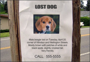 Tips for Advertising a Lost Pet
