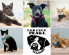 Reduced Dog & Cat Adoption Fees at FCAC