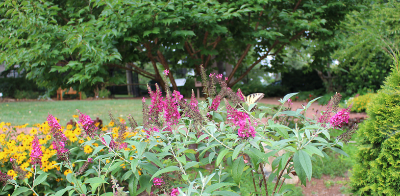Learn More About Native Plants During National Pollinator Week